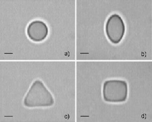 Figure showing spherical (undeformed), 'oval', 'triangular' and 'square' emulsion droplets