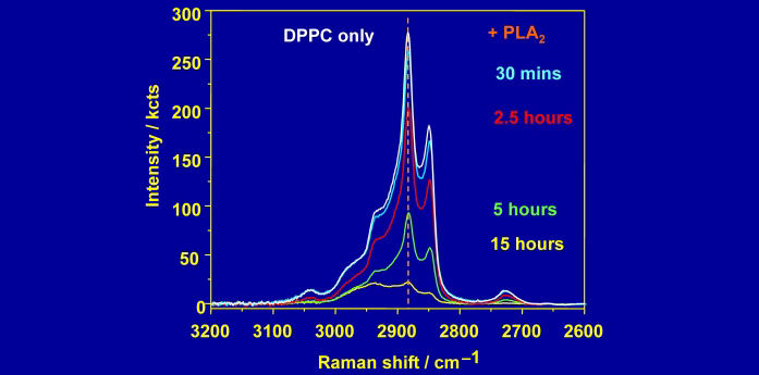 Reaction of a DPPC pslb with PLA2, followed by Raman scattering